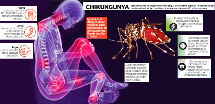 Chikungunya-somos1