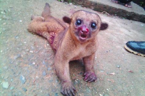 maltrato animal 1.jpg