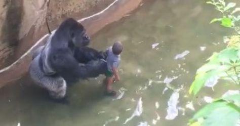 gorila-nino_0.jpeg