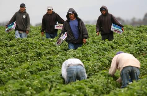 Migrantes-Trabajando.jpg