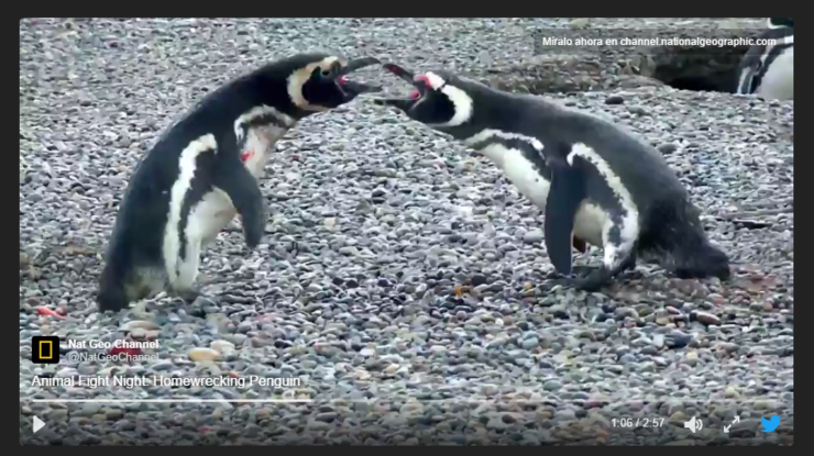 Pinguinos peleadores 2.jpg.png